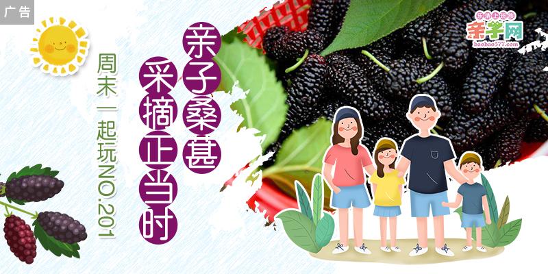 【上班族亲子网周末一起玩NO.201】——春日桑葚满枝头,亲子采摘正当时!